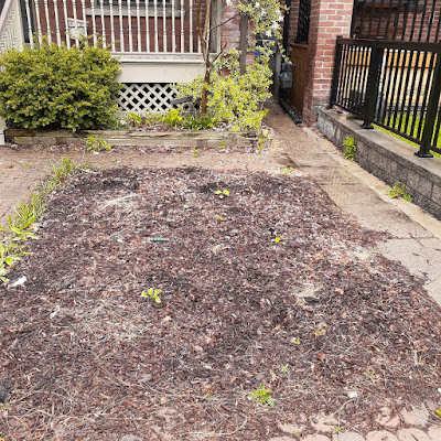 Toronto Riverdale Front Garden Spring Cleanup Before by Paul Jung Gardening Services--a Toronto Organic Gardening Company