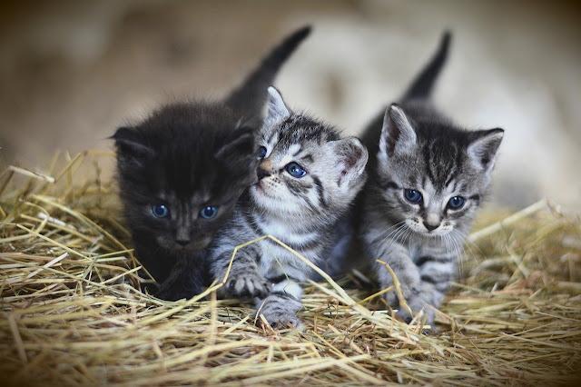 أجمل القطط الصغيرة جدا