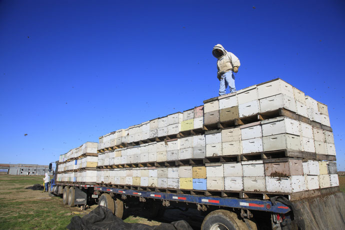 Migratory Beekeepers Move Their Bees Across The Country