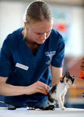 A kitten is being given an injection by a female vet in blue scrubs