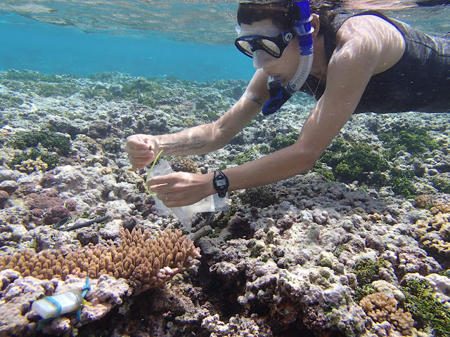 Biologists identify ancient stress response in corals