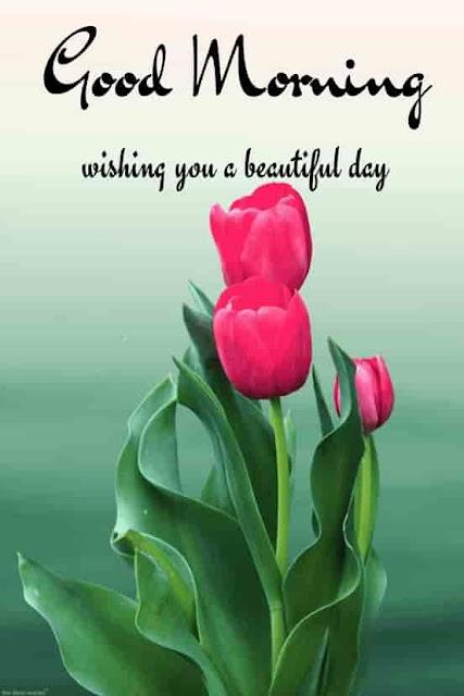 good morning flower images for whatsapp