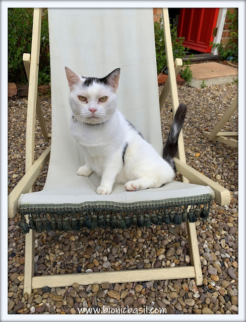 Smooch in the vintage deck chair ©BionicBasil® The Pet Parade 360