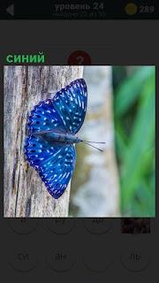 На дереве на коре сидит синяя бабочка и шевелит усами
