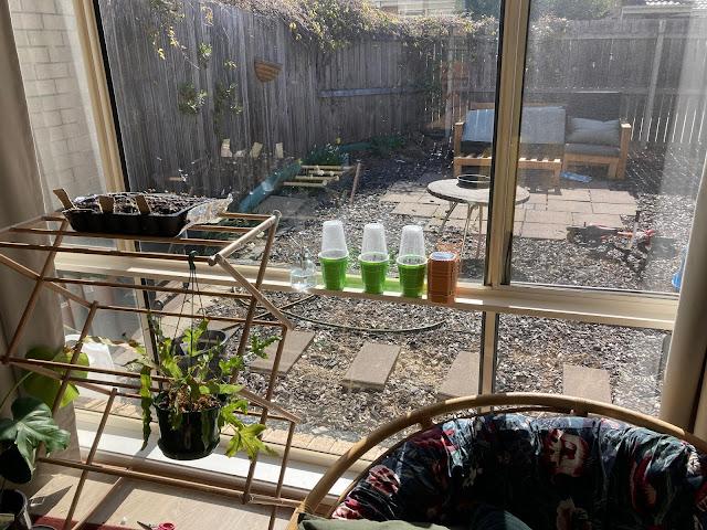 Seed raising indoors