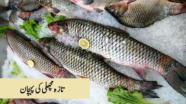 Taza machli(Fish) ki pehchan تازہ مچلی  کی پہچان
