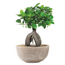buy bonsai plant on amazon