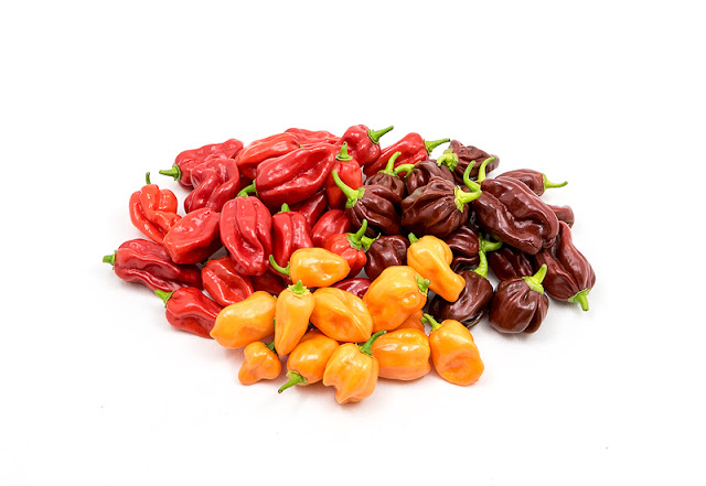 Red, orange and chocolate habaneros close up