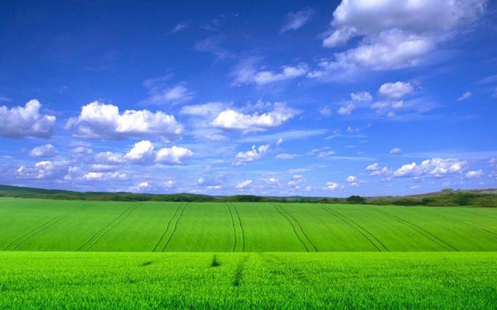 Green Fields With Blue Sky