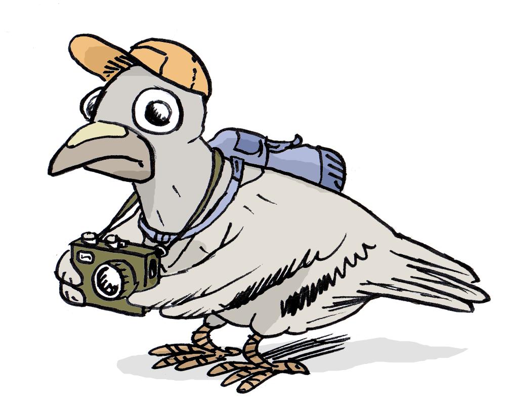 Ray clid crobarde un pigeon voyageur - Voyageur dessin ...