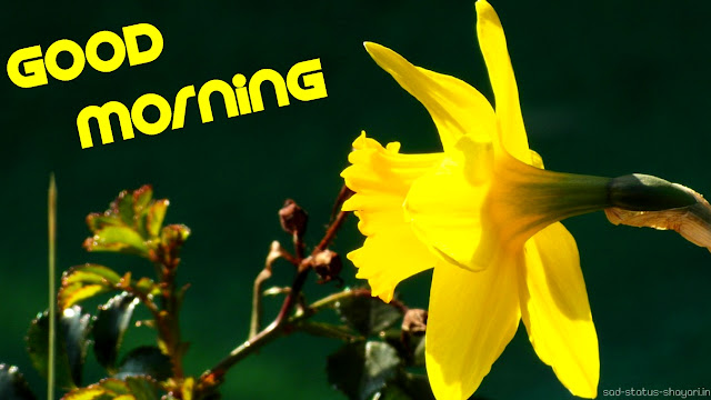 Good morning image yellow flower