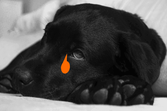 how to caring for your sick dog