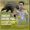 Polda Aceh Berhasil Ungkap Berbagai Kasus Ilegal Mining, IIegal Logging dan Perdagangan Satwa