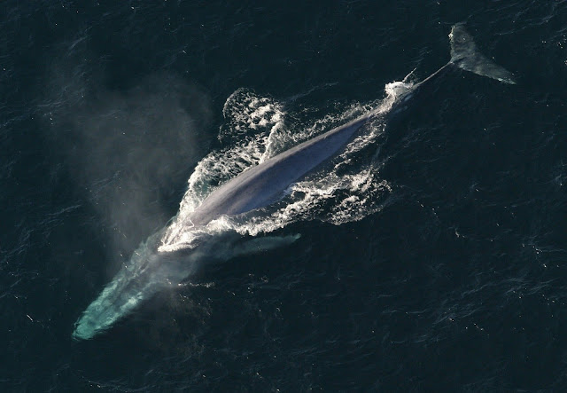 whales fun facts