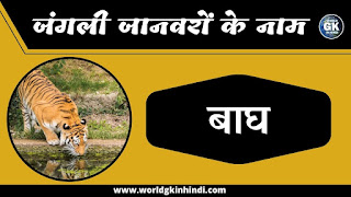 Tiger animal name in hindi | Wild Animals Name In Hindi