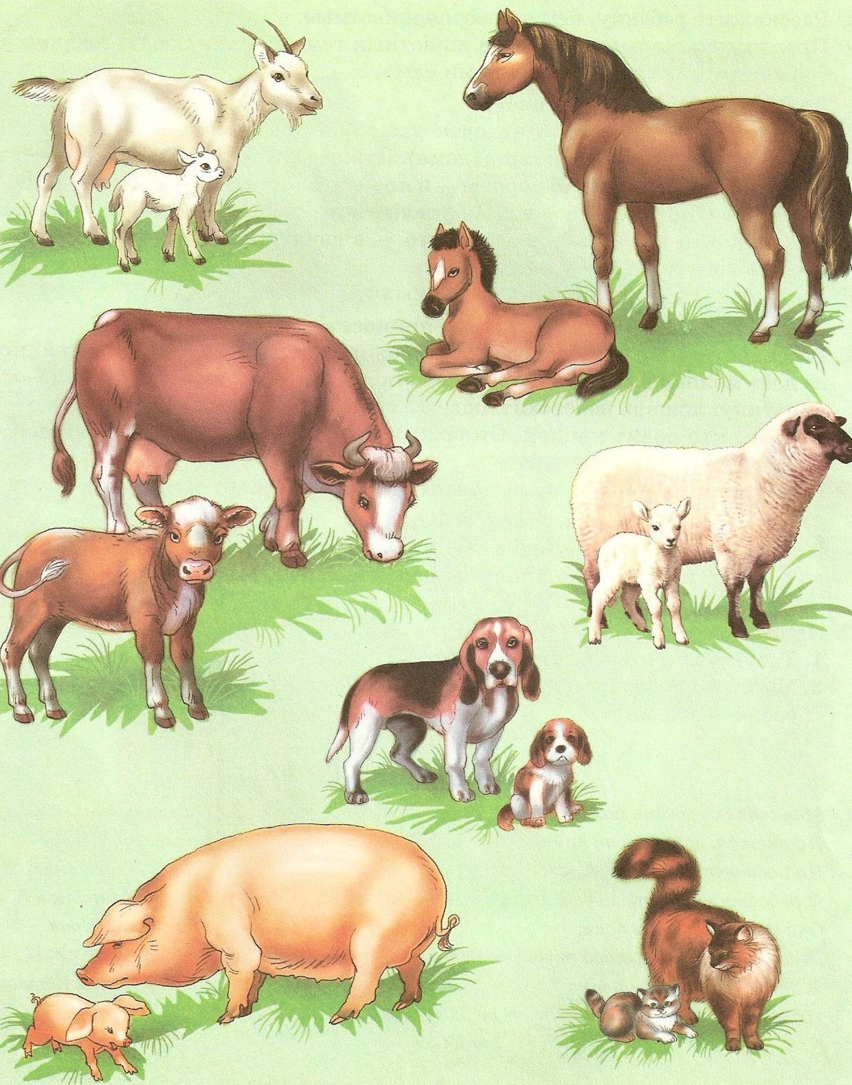 Картинки животных весной поэтапно с фото