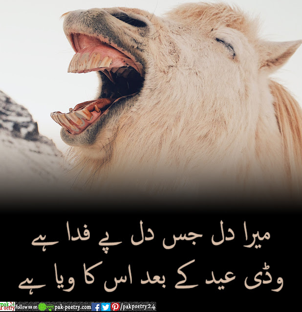 Mera dill his dill pe fda ha - Eid Special And Funny Poetry In Urdu
