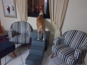 plataforma para cães