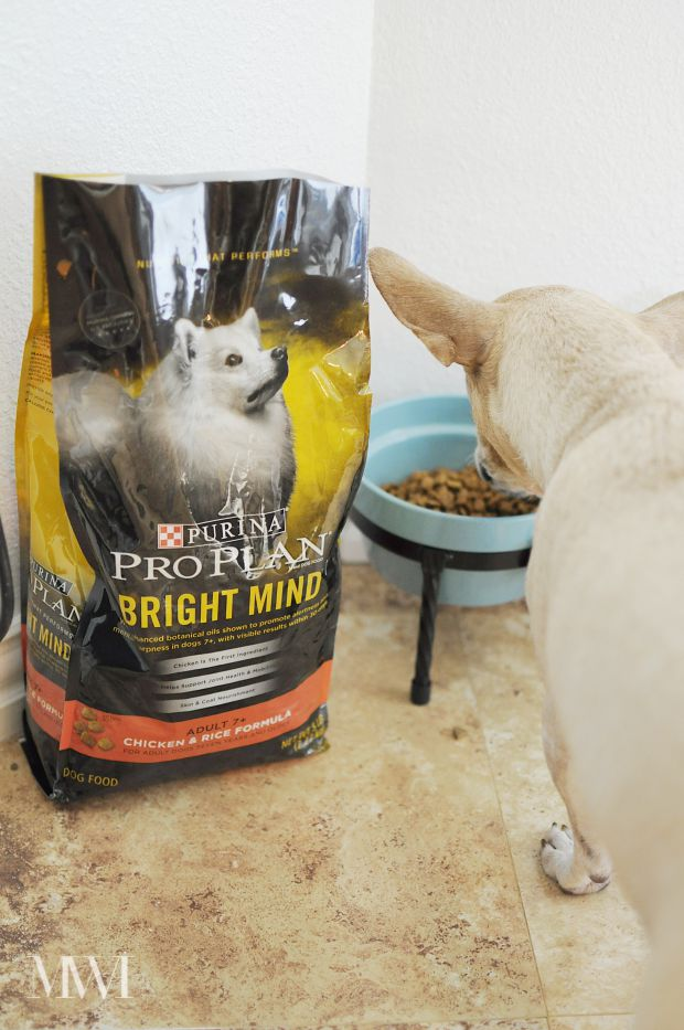 Purina Pro Plan Bright Mind dog food is designed to promote alertness and sharpness in senior dogs ages 7+. Read a review from a blogger's perspective as she transitions her 10 year old dog to this food.