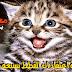 حقيقة اعتقاد ان القطط بسبعة ارواح