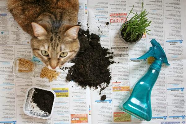 Как вырастить траву для кота