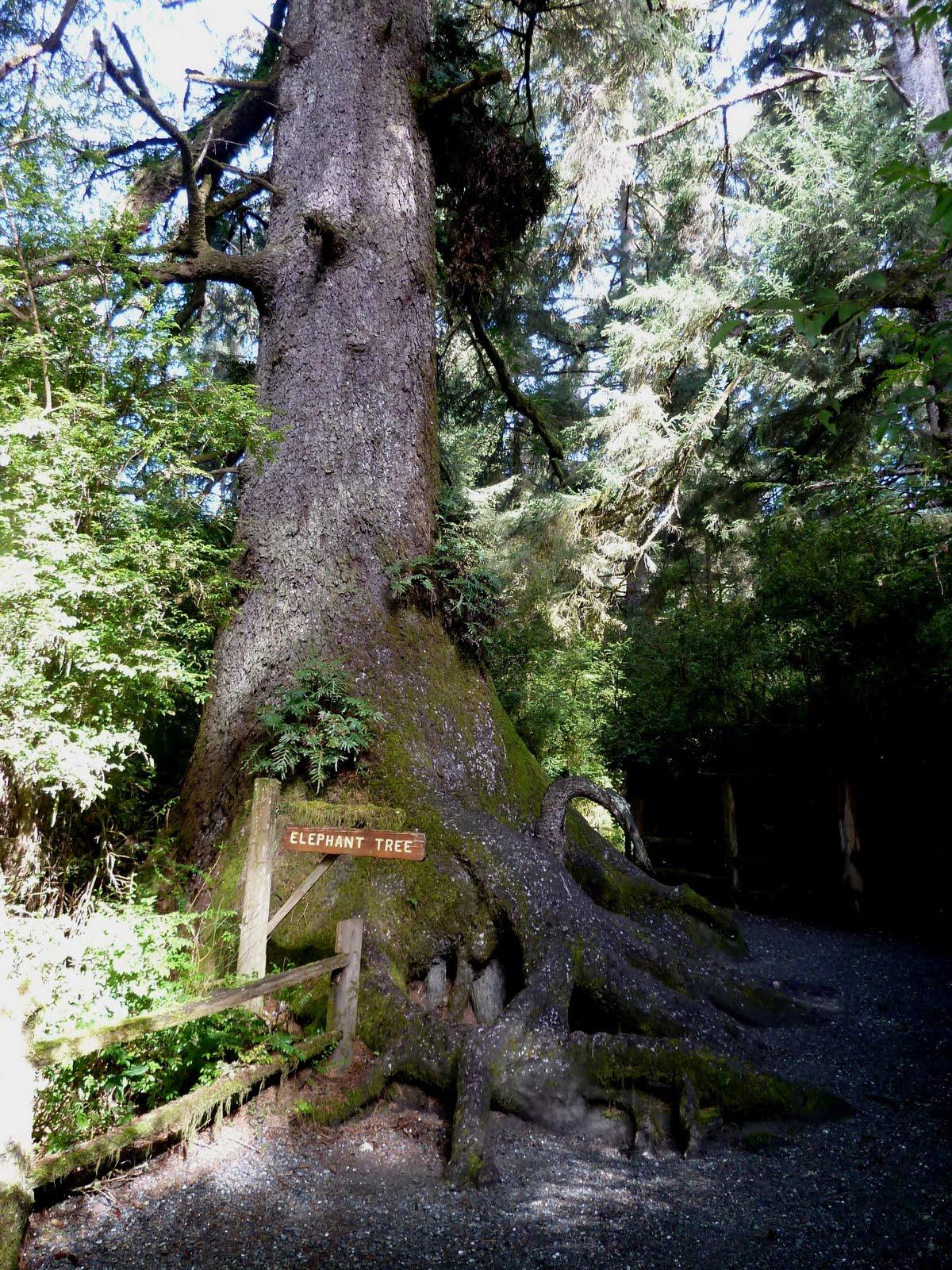 Seniors Walking Across America Day 47 Trees Of Mystery