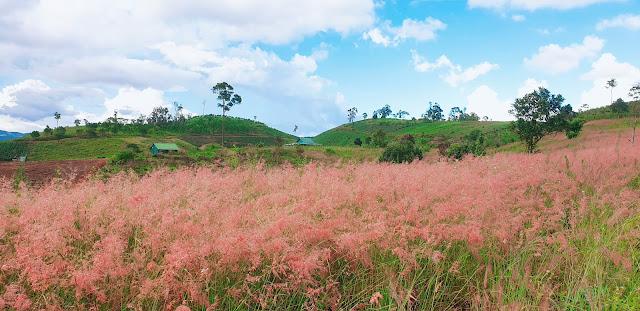 Đồi cỏ hồng Tà Nung