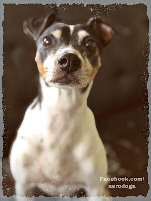 yoga, perros, perritos, dogs, mascotas, naturaleza, animales, yoga aereo, aerodoga, doga, wellness, salud, ejercicio, puppies