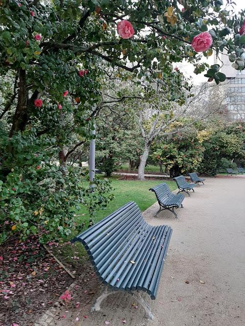 Bancos no Jardim do Palácio de Cristal e uma árvore de camélias