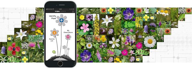 Flora Incognita App