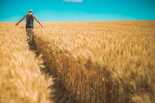 Where can Crop Scientist Work in Nigeria: Careers | Salary