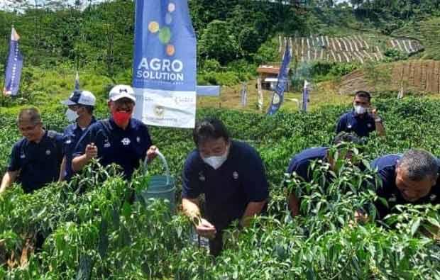 Cabai Program Agro Solution Panen di Aceh