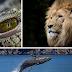 Oxitrivia: ¿Qué tanto sabes sobre los animales más poderosos del mundo?