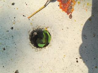 #30DaysWild leafcutter bee nest