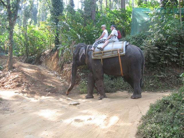 ballade a dos d'éléphant