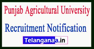 Punjab Agricultural University PAU Recruitment Notification 2017