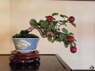 apple bonsai tree growing tips