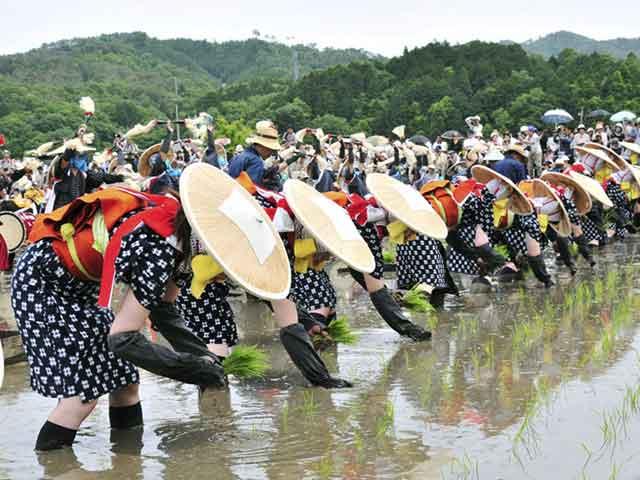 Festival menanam beras di Jepang