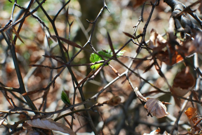 single green leaf amongst branches and brown leaves