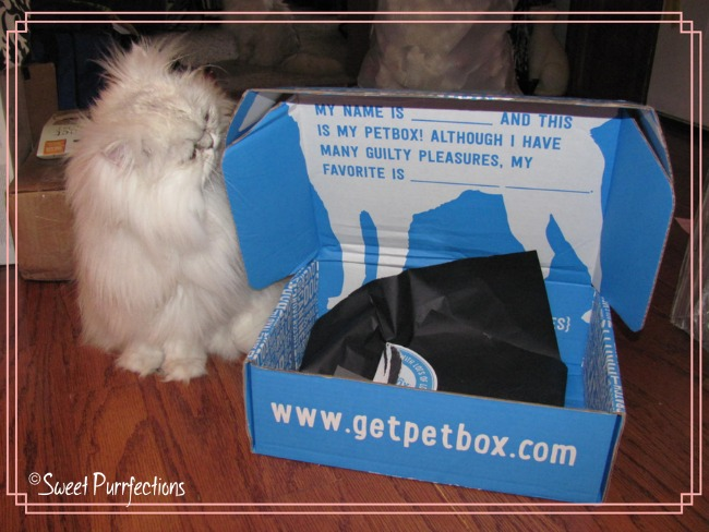 1st review photo with Brulee and Get Pet Box