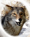 Smiling Coyote Farm