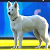 Dog runs on pitch, interrupts Swiss Super League soccer match