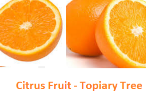 Topiary Tree -citrus orange peels - Oranges citrus fruit peel (Santre Ke Chilke)