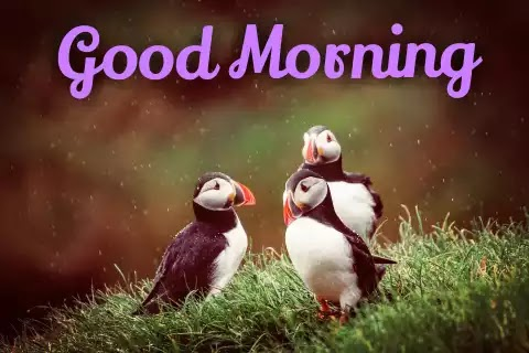 Good Morning Images With Birds Download