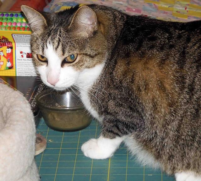 Industrious Cream Cat Bowl Small Cat Supplies Pet Supplies