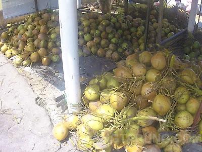 buah kelapa muda coconut shake klebang