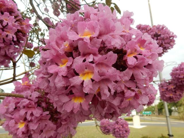 Arvore flores rosas em forma de bola