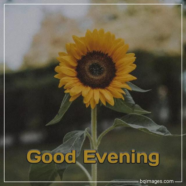 good evening beautiful flowers