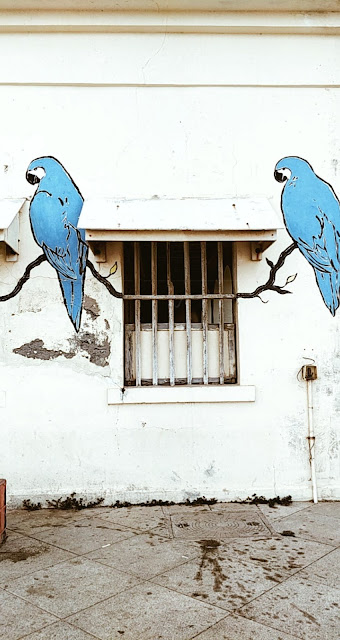 Pondicherry-travel-weekend-getaway-style prism-blog-street photography-window-street art-birds