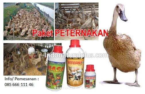 Ternak Itik atau Bebek Menggunakan Produk Organik Nasa